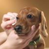 Dog Grooming and Health